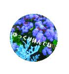 EUROPE flower2♡♡[日本語](個別スタンプ:12)