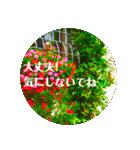 EUROPE flower2♡♡[日本語](個別スタンプ:13)