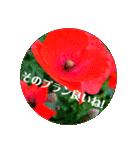 EUROPE flower2♡♡[日本語](個別スタンプ:14)