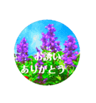 EUROPE flower2♡♡[日本語](個別スタンプ:16)