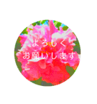 EUROPE flower3♡[日本語敬語](個別スタンプ:01)