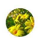 EUROPE flower3♡[日本語敬語](個別スタンプ:08)