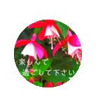 EUROPE flower3♡[日本語敬語](個別スタンプ:10)