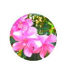 EUROPE flower3♡[日本語敬語](個別スタンプ:11)