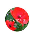 EUROPE flower3♡[日本語敬語](個別スタンプ:14)