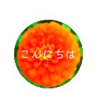 EUROPE flower3♡[日本語敬語](個別スタンプ:15)