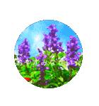 EUROPE flower3♡[日本語敬語](個別スタンプ:16)