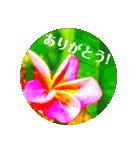 Malaysia island2♡♡[日本語](個別スタンプ:01)