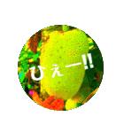 Malaysia island2♡♡[日本語](個別スタンプ:07)