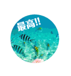 Malaysia island2♡♡[日本語](個別スタンプ:13)