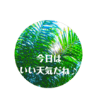 Malaysia island2♡♡[日本語](個別スタンプ:15)