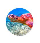 sea world3♡[日本語敬語](個別スタンプ:04)
