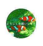 sea world3♡[日本語敬語](個別スタンプ:11)