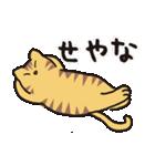 茶トラ猫の使いやすい可愛いスタンプ(個別スタンプ:14)