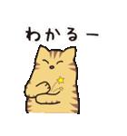 茶トラ猫の使いやすい可愛いスタンプ(個別スタンプ:24)