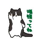 ハチワレ猫の使いやすいかわいいスタンプ(個別スタンプ:01)