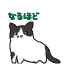 ハチワレ猫の使いやすいかわいいスタンプ(個別スタンプ:06)