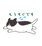 ハチワレ猫の使いやすいかわいいスタンプ(個別スタンプ:08)