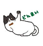 ハチワレ猫の使いやすいかわいいスタンプ(個別スタンプ:10)