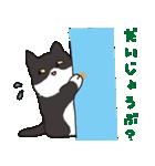 ハチワレ猫の使いやすいかわいいスタンプ(個別スタンプ:18)