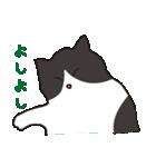ハチワレ猫の使いやすいかわいいスタンプ(個別スタンプ:19)