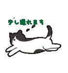ハチワレ猫の使いやすいかわいいスタンプ(個別スタンプ:21)