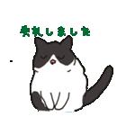ハチワレ猫の使いやすいかわいいスタンプ(個別スタンプ:24)