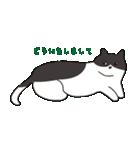 ハチワレ猫の使いやすいかわいいスタンプ(個別スタンプ:31)
