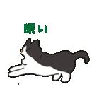 ハチワレ猫の使いやすいかわいいスタンプ(個別スタンプ:37)