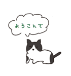 ハチワレ猫の使いやすいかわいいスタンプ(個別スタンプ:40)