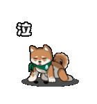 緑バンダナのシバ with Kanji(個別スタンプ:21)