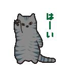 サバトラ猫の毎日使いやすいスタンプ(個別スタンプ:01)