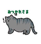 サバトラ猫の毎日使いやすいスタンプ(個別スタンプ:02)