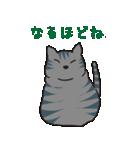 サバトラ猫の毎日使いやすいスタンプ(個別スタンプ:03)