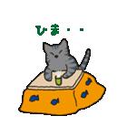 サバトラ猫の毎日使いやすいスタンプ(個別スタンプ:05)
