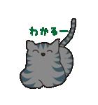サバトラ猫の毎日使いやすいスタンプ(個別スタンプ:06)