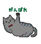 サバトラ猫の毎日使いやすいスタンプ(個別スタンプ:11)