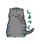 サバトラ猫の毎日使いやすいスタンプ(個別スタンプ:13)
