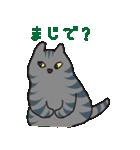 サバトラ猫の毎日使いやすいスタンプ(個別スタンプ:15)