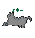 サバトラ猫の毎日使いやすいスタンプ(個別スタンプ:17)