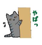 サバトラ猫の毎日使いやすいスタンプ(個別スタンプ:20)
