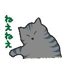 サバトラ猫の毎日使いやすいスタンプ(個別スタンプ:21)