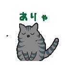 サバトラ猫の毎日使いやすいスタンプ(個別スタンプ:28)