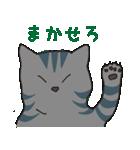 サバトラ猫の毎日使いやすいスタンプ(個別スタンプ:29)
