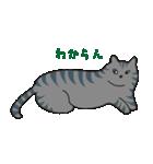サバトラ猫の毎日使いやすいスタンプ(個別スタンプ:35)