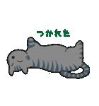 サバトラ猫の毎日使いやすいスタンプ(個別スタンプ:37)