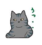 サバトラ猫の毎日使いやすいスタンプ(個別スタンプ:40)