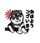 黒豆柴っち(個別スタンプ:1)