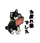 黒豆柴っち(個別スタンプ:3)