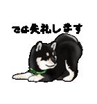 黒豆柴っち(個別スタンプ:8)